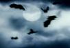灰云与乌鸦