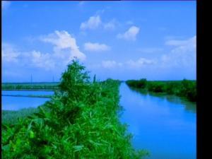 竹林旁的河流