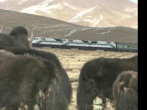 青藏铁路-山间奔驰的火车
