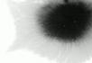 水墨视频素材10