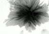 水墨视频素材8