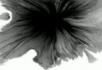 水墨视频素材6