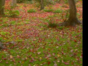 红叶落满地