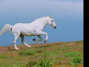 一匹马奔跑