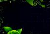 绿色花纹生长