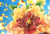 金牡丹开花