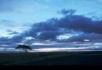 白云下的草地