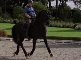 马奔跑慢动作