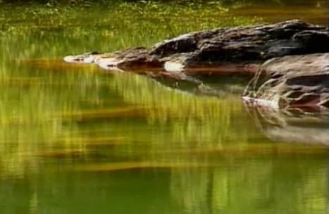 山中湖水中石绿叶