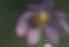 模拟昆虫眼