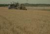 农产品丰收