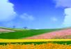 美丽的田野