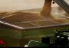 机械化收割小麦