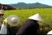 人工收割稻谷和机械收割