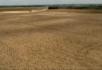 收割机收割小麦