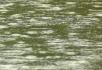 下雨时雨滴入水面