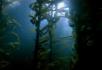 阳光透过海底的树