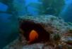热带鱼嬉戏