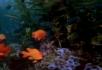 热带鱼群在植物中穿梭