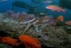 热带鱼和海星