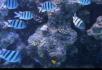热带鱼1组