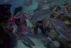 潜水的人和热带鱼
