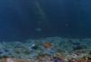 飘动的海底植物