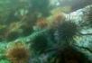 漂亮的海底生物