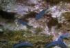 爬行的龙虾