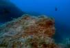 爬行中的小章鱼
