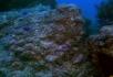 菊黄色的热带鱼