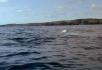 鲸鱼群喷水