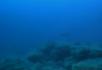 海底植物1