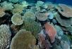 海底植物开花
