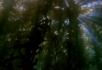 海底树林2