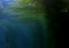 海底树林1