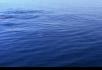 各种各样的海豚