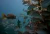 漂亮的热带鱼群