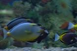 鱼缸的热带鱼