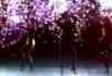 舞蹈371