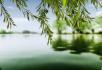 春风又绿柳树河岸