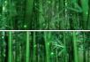 竹林深处竹海
