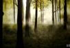 森林的早晨