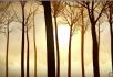 早晨阳光照耀森林