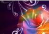 唯美彩色玫瑰绽放婚庆