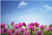 L1203蓝天白云鲜花背景