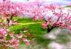 桃花园荷花塘