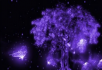 紫色光效蝴蝶树