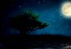 山楂树萤火虫