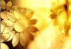 金灿灿的花朵
